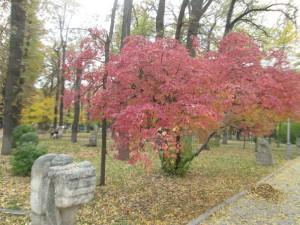 Autumn in Bishkek