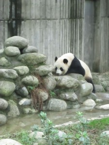 PandaDrink