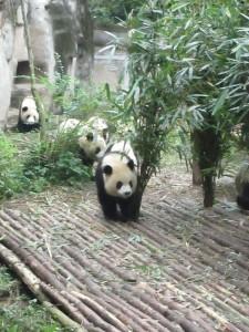 PandaHereCometheGirls
