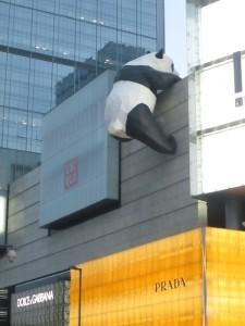 Panda getting into Prada in Chengdu
