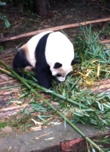 PandaSearch