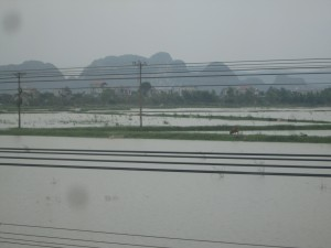 Rice fields in Vietnam from the train