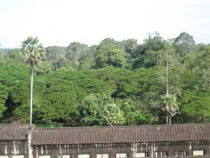 View from top of Angkor Wat