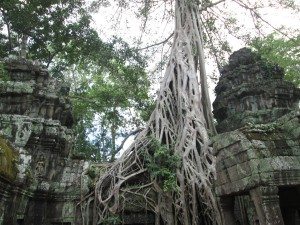 AngkorRootSpaghetti