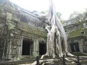 AngkorTreeRoots