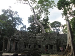 Trees growing in Angkor temple