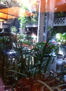 The hidden garden at Tram Cafe in Saigon